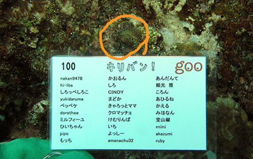 greenz.jp/グリーンズ gooホームPROJECTで植え付けられた実際のサンゴ礁