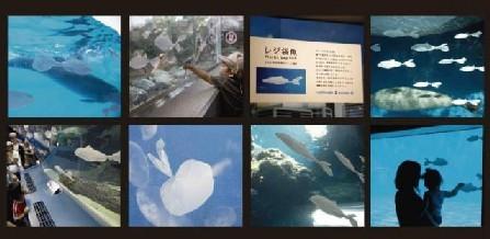20080624-06.jpg