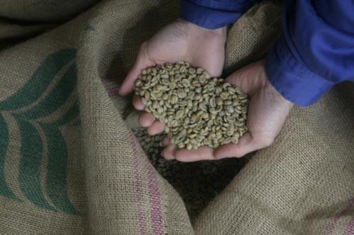 greenz/グリーンズ コーヒーの生豆