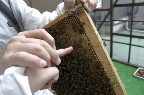 greenz/グリーンズ 銀パチ蜂蜜