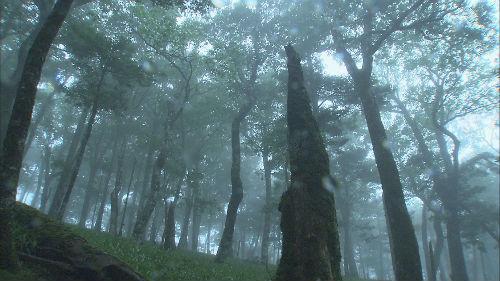 「雨の物語—大台ケ原 日本一の大雨を撮る」 監督:内浦 崇