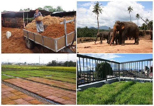 ぞうさん緑化マット 屋上緑化 象 環境問題 スリランカ