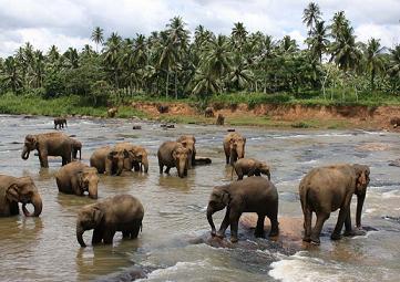 ぞうさん緑化マット スリランカ 環境問題 象