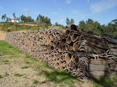 コルク樫から採取されたコルク原材。コルク樫は地中海周辺の南欧や北アフリカに分布しています。ワインやシャンパンの栓としてスクリューキャップが浸透してきたことでコルクの需要が減り、数年後にはその森の4分の3が失われる可能性があるとか・・・。Taken in Portugal (Algarve) by Carsten Niehaus in March 2004.  Creative Commons: Some Rights Reserved.