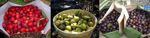 色々な種類の果物が収穫できるようです。 (c)All Rights Reserved