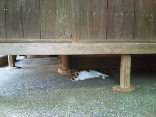 庭園内の茶室「翠庵・明月軒」の床下の猫