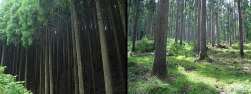 左)約40年の(暗い)森、右)約100年の(明るい)森(写真提供:トビムシ)