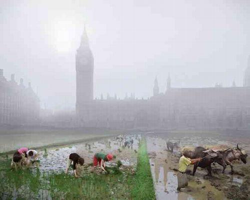 ウェストミンスター寺院が見える場所に位置するパーラメントスクエア。現在は、芝生に覆われた広場ですが、食料危機の結果、田んぼへと様変わり!? 'Parliament Square rice paddies' Image(c)Robert Graves and Didier Madoc-Jones