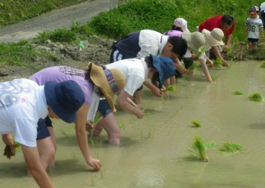 「アースカラー」をきっかけに、一緒に稲刈りや畑を始める仲間の輪も広がっています。