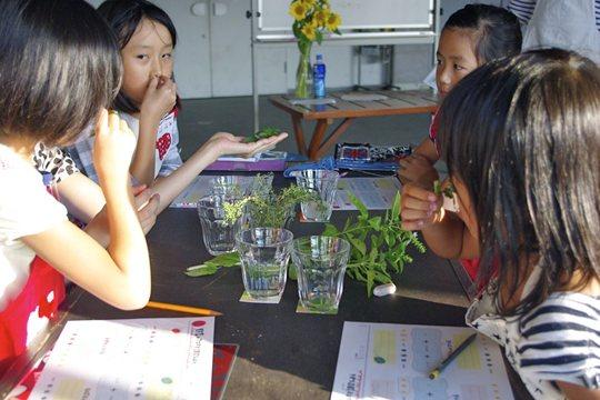 種から育てる子ども料理教室