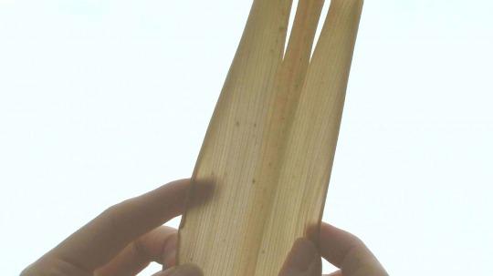 カシロダケの皮。皮白竹と書かれることもあり、色の白いのが特徴