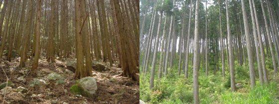 管理されずに荒廃した森(左)と管理されてきれいに葉が茂る香北赤塚山団地内の森(右)