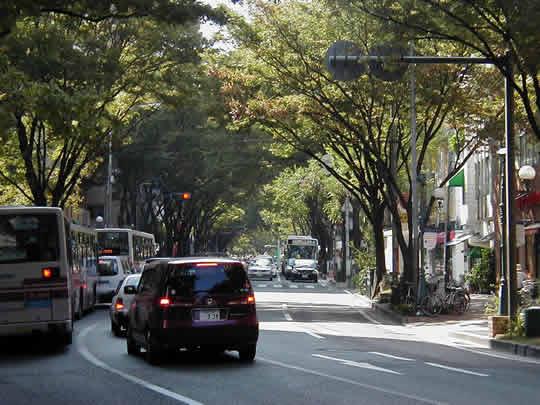 20051108-keyaki